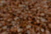 Kaboompics - Blurred background with brown leaves