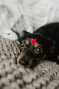 Kaboompics - A dog with heart on head