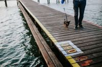 Kaboompics - Little dog on a pier