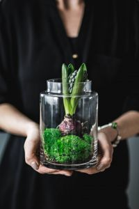 Kaboompics - Woman holding a green seedling planted in a glass pot