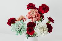 Kaboompics - Colorful carnations flowers - Dianthus caryophyllus