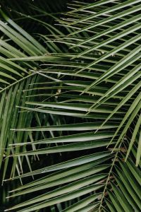 Kaboompics - Tropical palm leaves, floral pattern background
