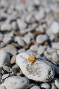 Kaboompics - A little shell on a rock