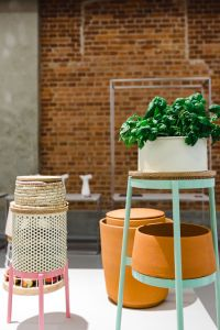 Kaboompics - Green plants in a white flowerpot on a stool