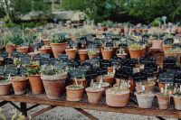 Kaboompics - Miscellaneous plants in ceramic pots
