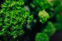 Kaboompics - Close-ups of green plants