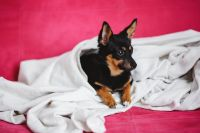 Kaboompics - A cute puppy in a pink bed